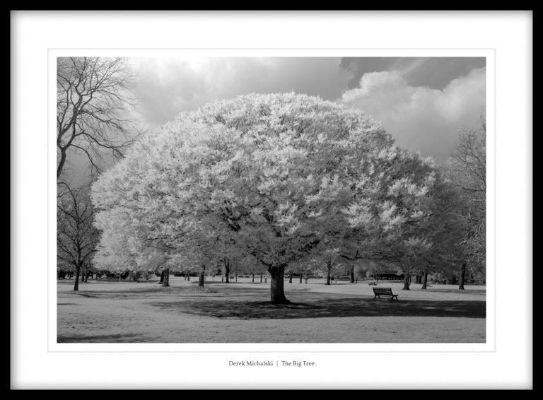 IR - Crayford - Hall Place - 20 April 2021 IMG_9264 The Big Tree