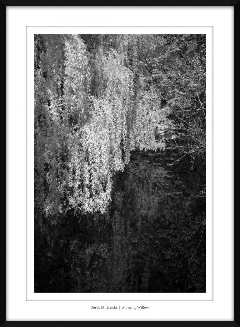 IR - Dartford - Brooklands Lake - 20 April 2021 IMG_9092 Morning Willow copy